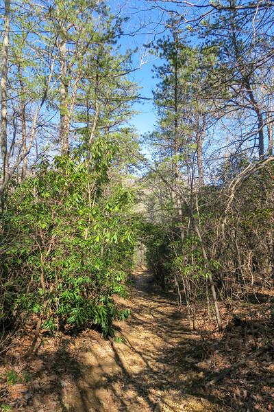 Trace Ridge Trail -- 3,380'