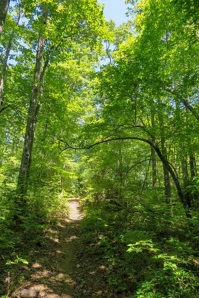 Turkeypen Gap Trail -- 3,280'