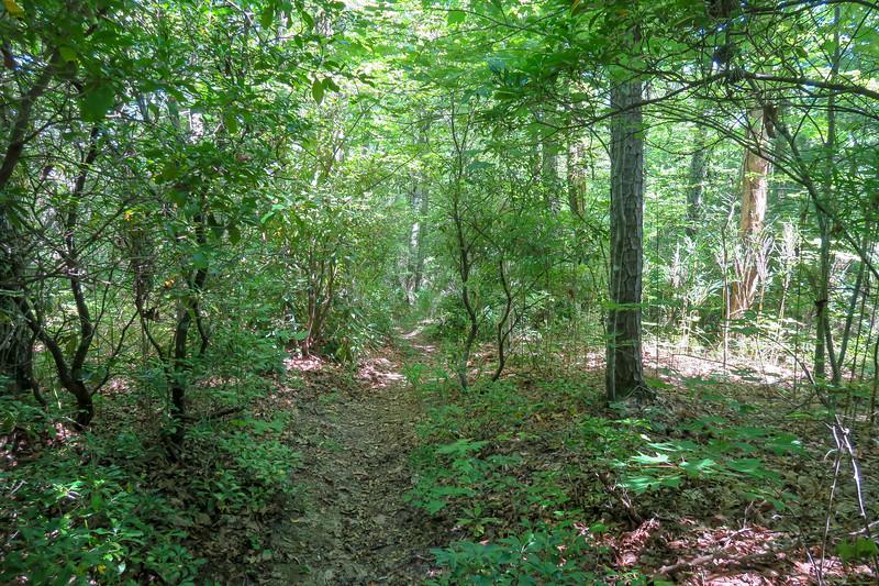 Turkeypen Gap Trail -- 3,150'