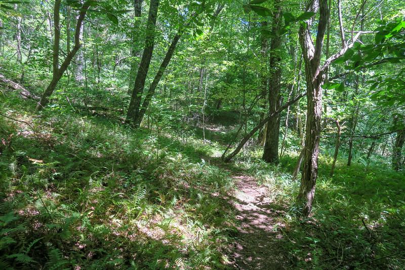 Turkeypen Gap Trail -- 4,070'
