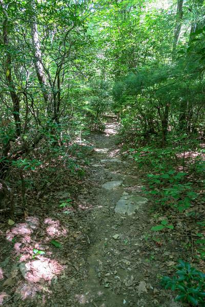Turkeypen Gap Trail -- 3,200'