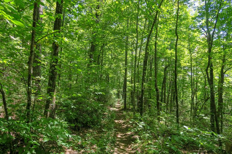 Turkeypen Gap Trail -- 3,750'
