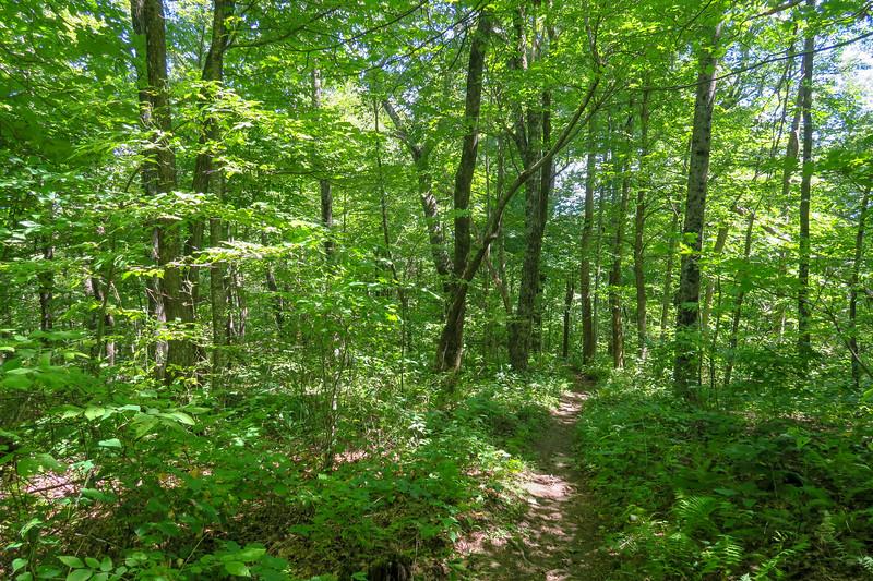 Turkeypen Gap Trail -- 3,950'
