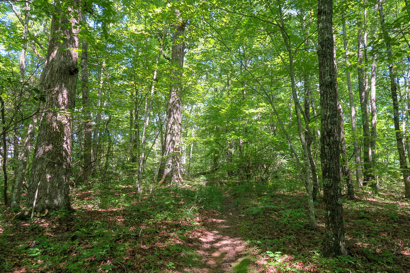 Turkeypen Gap Trail -- 3,080'