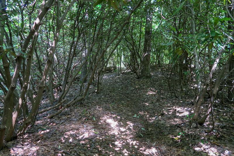 Turkeypen Gap Trail -- 3,100'