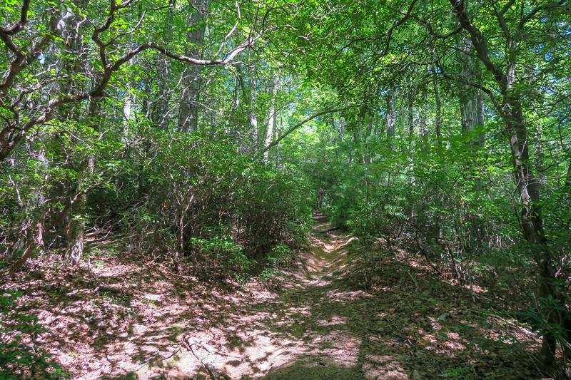 Turkeypen Gap Trail -- 3,060'