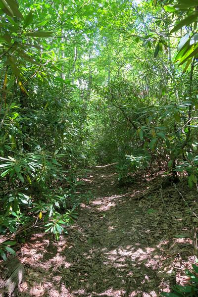 Turkeypen Gap Trail -- 3,050'