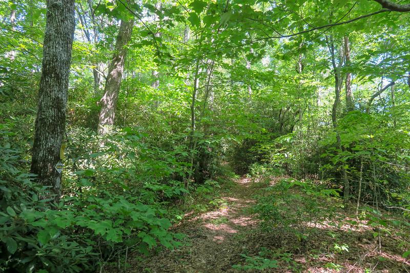Turkeypen Gap Trail @ Sandy Gap -- 3,000'