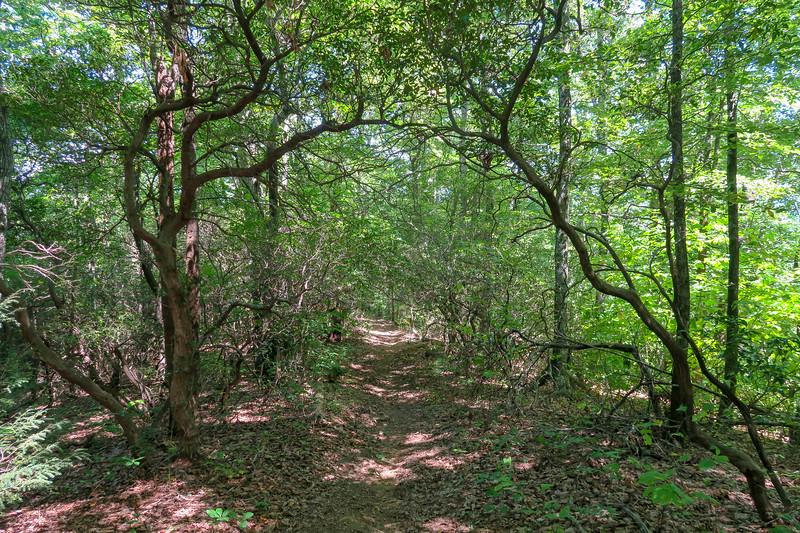 Turkeypen Gap Trail -- 3,350'
