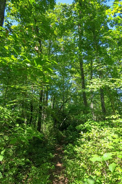 Turkeypen Gap Trail -- 3,300'