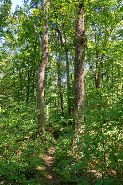 Turkeypen Gap Trail -- 3,550'
