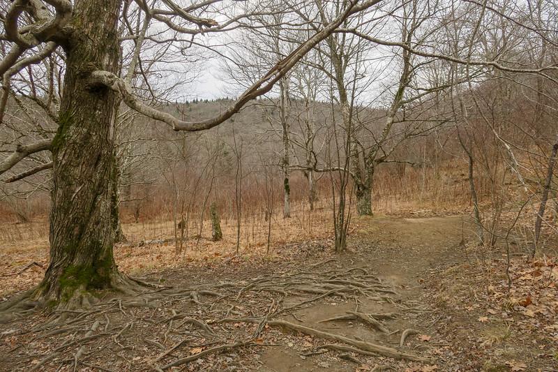 Upper Falls Trail -- 5,130'