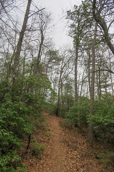 Vineyard Gap Trail -- 2,900'