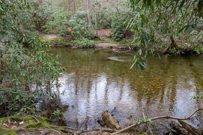 Vineyard Gap Trail @ South Fork Mills River -- 2,280'