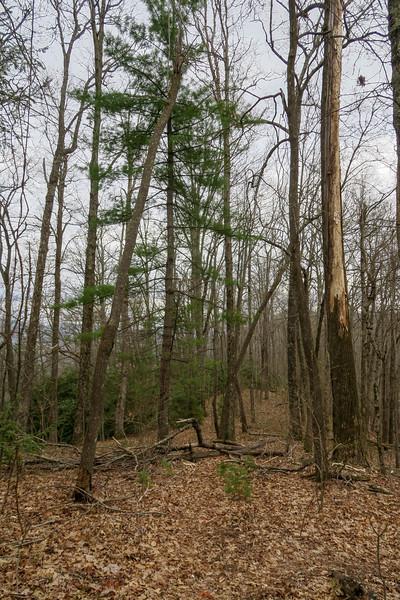 Vineyard Gap Trail -- 2,960'