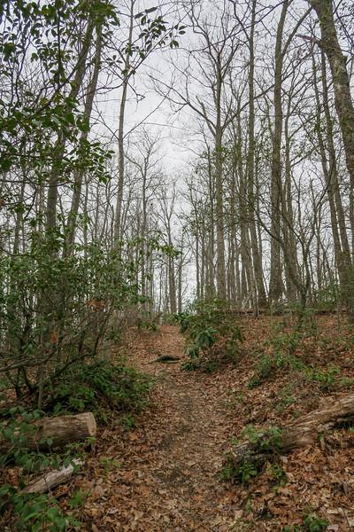 Vineyard Gap Trail -- 2,930'