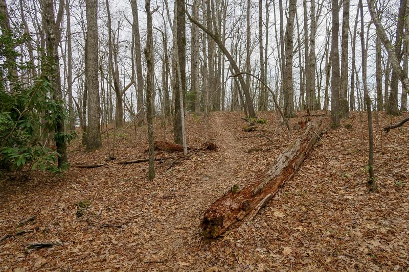 Vineyard Gap Trail -- 2,920'