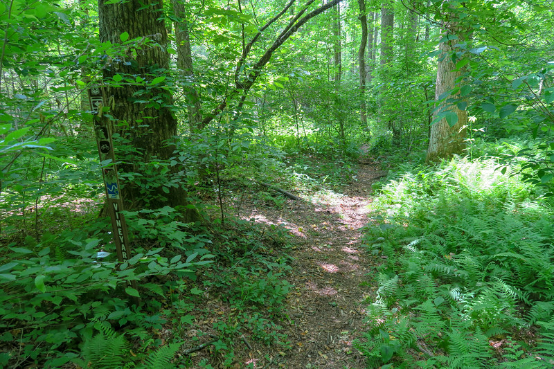 Vineyard Gap/Riverside Trail Junction -- 2,300'