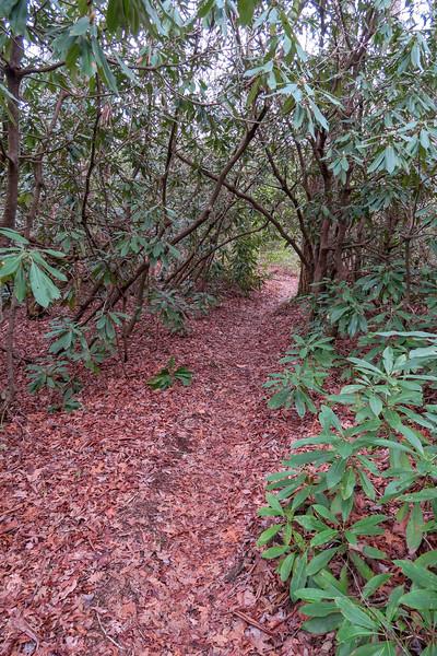 Vineyard Gap Trail @ Jim Gap -- 2,820'