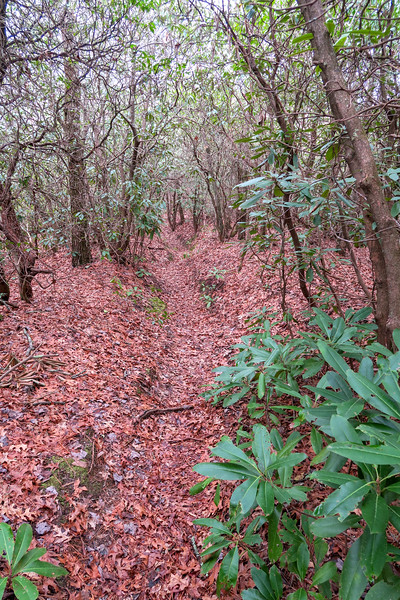 Vineyard Gap Trail -- 2,600'