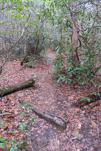 Vineyard Gap Trail -- 2,820'