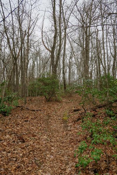 Vineyard Gap Trail -- 2,880'