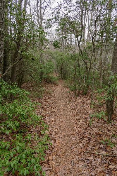 Vineyard Gap Trail -- 2,850'