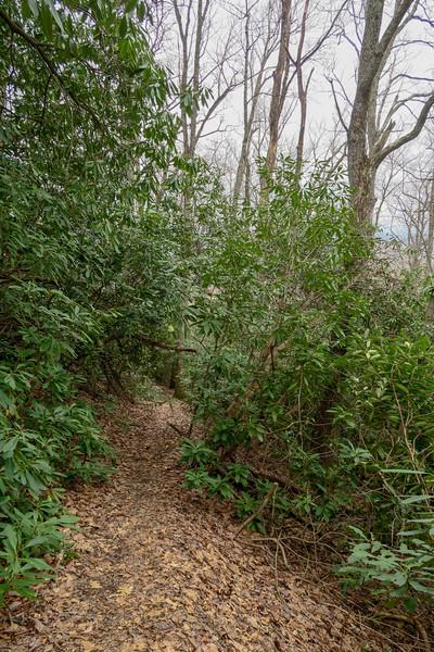 Vineyard Gap Trail -- 2,800'