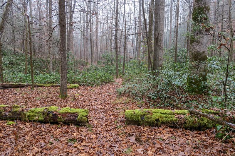 Wagon Road Gap Trail -- 2,600'