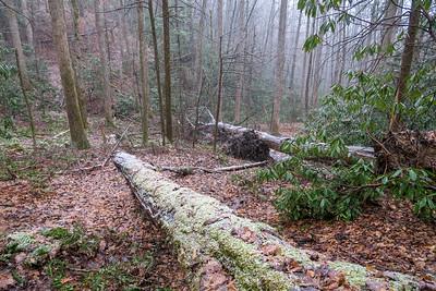 Wagon Road Gap Trail -- 2,850'