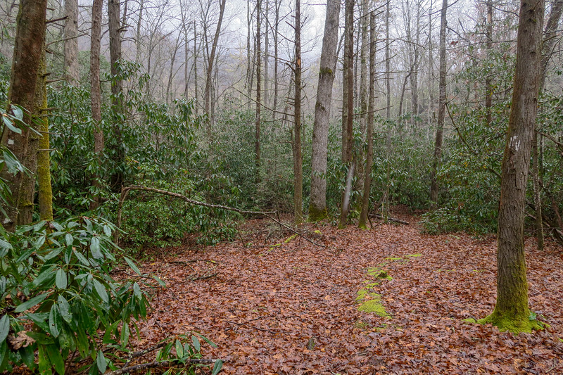 Wagon Road Gap Trail -- 2,540'