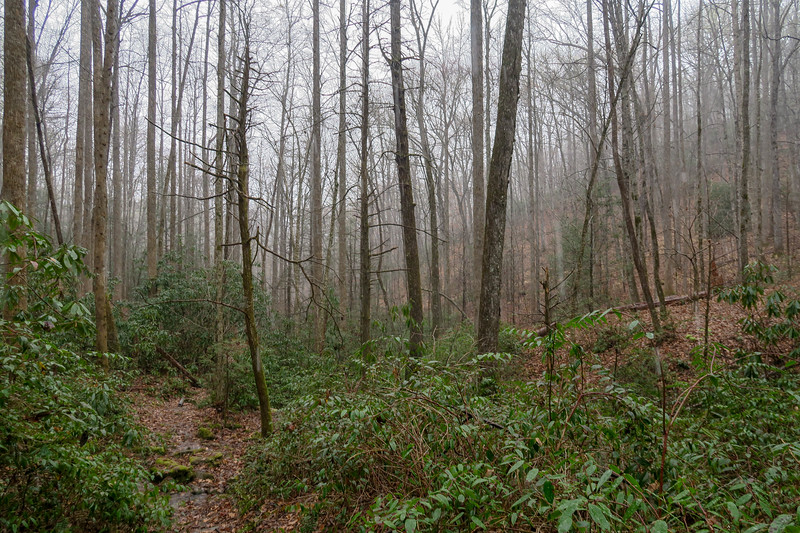 Wagon Road Gap Trail -- 2,700'