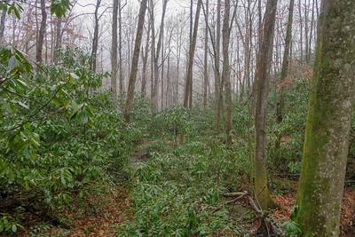 Wagon Road Gap Trail -- 2,580'
