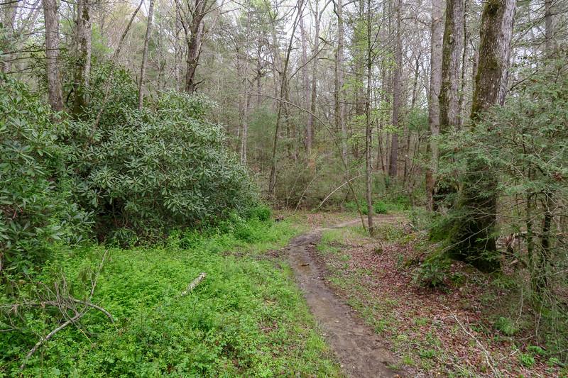 Wash Creek Trail -- 2,440'