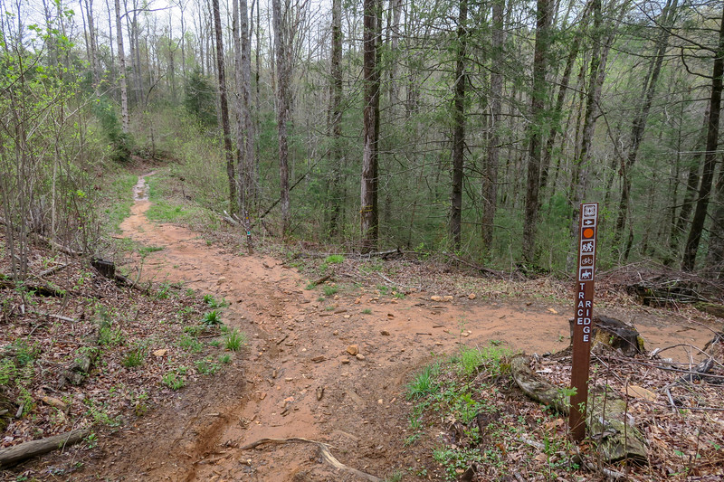 Wash Creek/Trace Ridge Trail Junction -- 2,400'