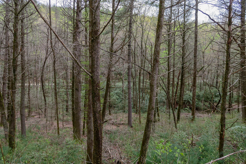 Wash Creek Trail -- 2,430'