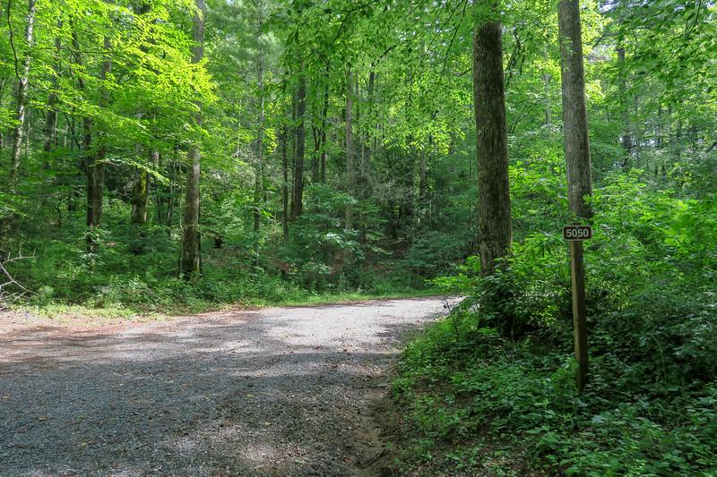Forest Road 5050 (Yellow Gap) Trailhead -- 2,400'
