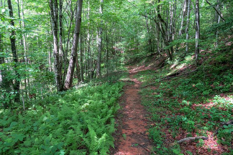 Yellow Gap Trail -- 2,480'