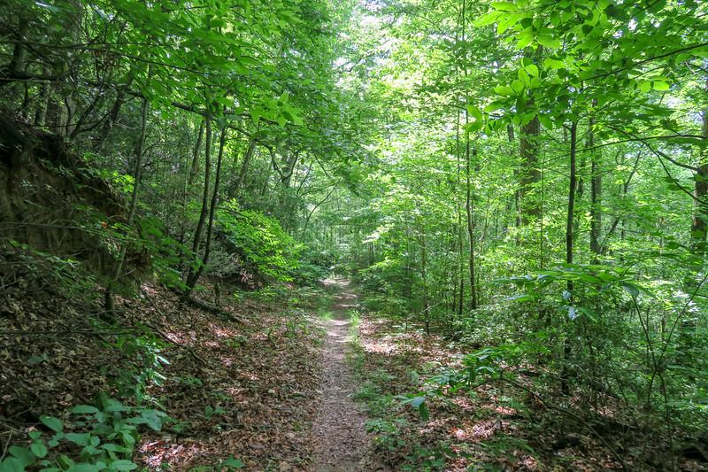 Yellow Gap Trail -- 2,580'