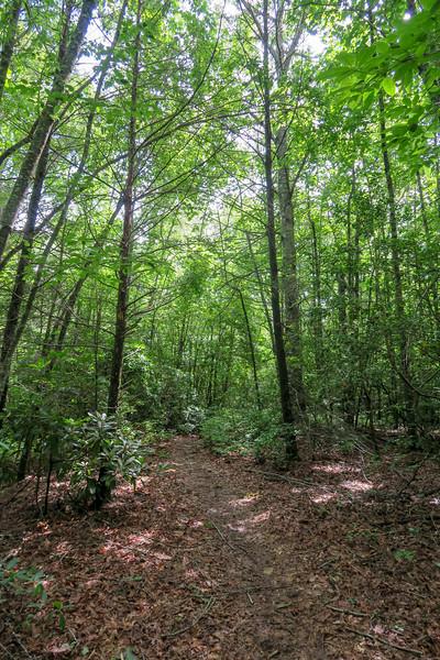Yellow Gap Trail -- 2,380'