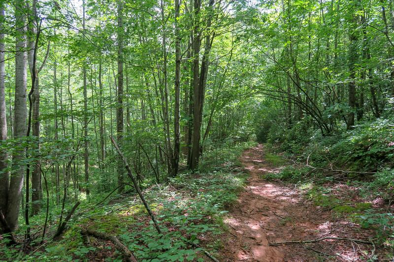 Yellow Gap Trail -- 2,460'