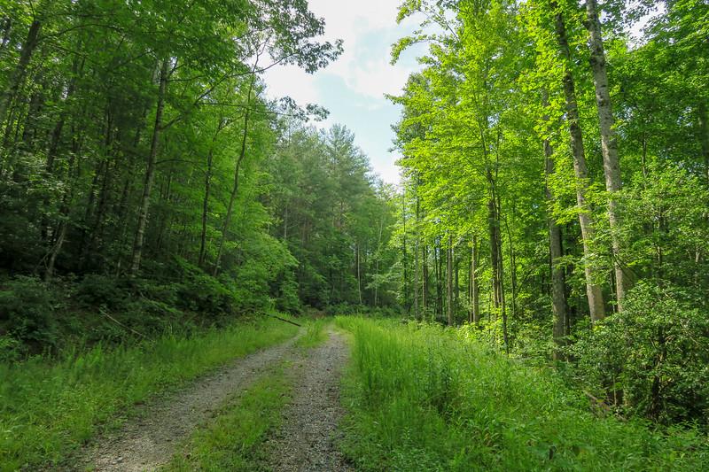 Yellow Gap Trail (F.R. 5050) -- 2,530'