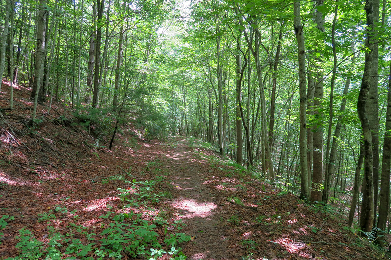 Yellow Gap Trail -- 2,530'