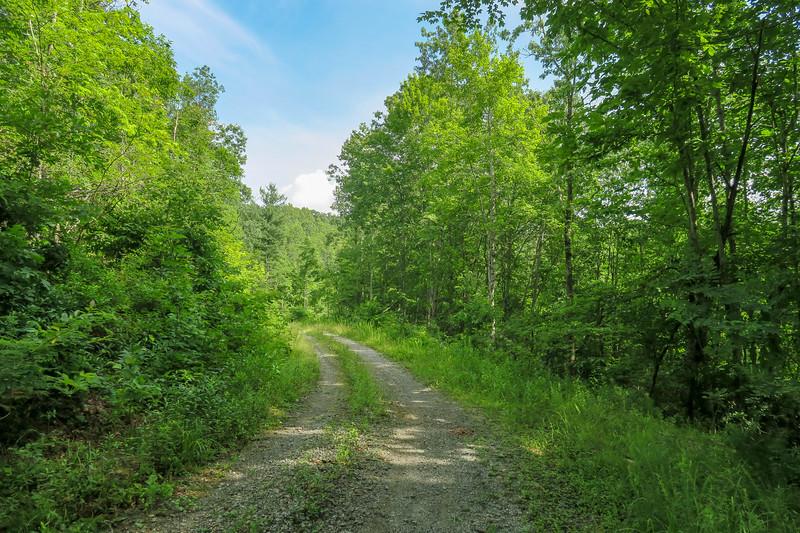 Yellow Gap Trail (F.R. 5050) -- 2,560'