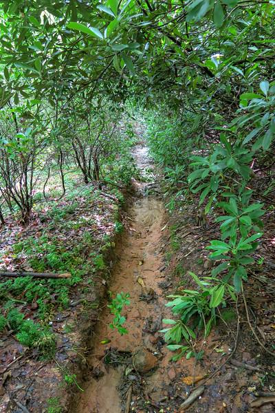 Yellow Gap Trail -- 2,440'