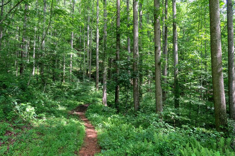 Yellow Gap Trail -- 2,670'
