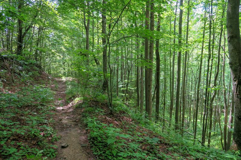 Yellow Gap Trail -- 2,550'