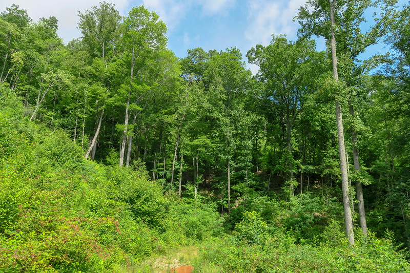 Yellow Gap Trail -- 2,720'