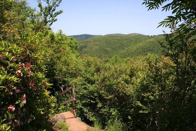 A flight of convenient steps provides us with our first elevated views.  Black Balsam Knob rises in the distance...