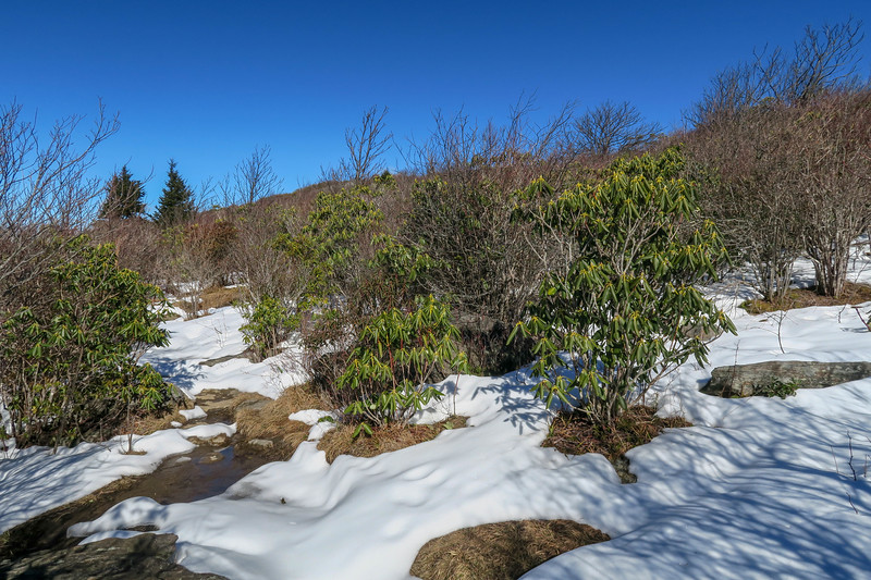 Sam Knob Summit Trail -- 5,980'